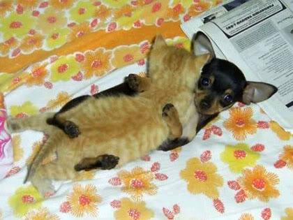 Cat And Dog Love Η αγάπη δεν κάνει διακρίσεις! Δείτε φωτό