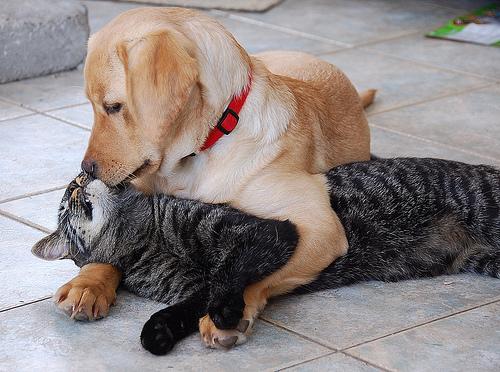 Cat And Dog Η αγάπη δεν κάνει διακρίσεις! Δείτε φωτό