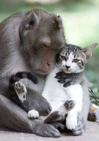 Monkey And Cat Η αγάπη δεν κάνει διακρίσεις! Δείτε φωτό