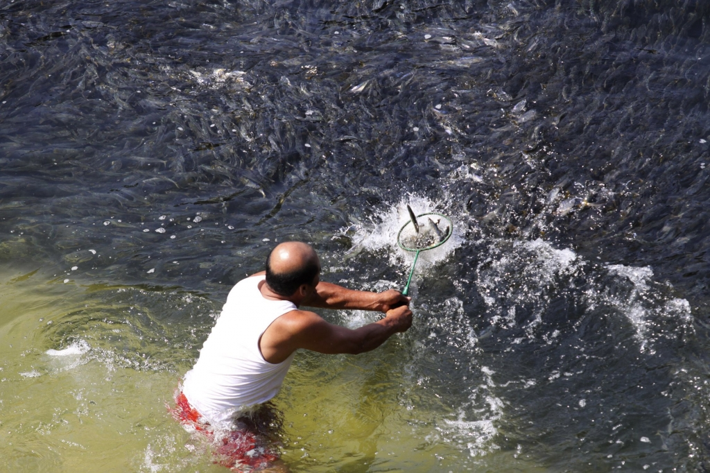 Εδω ο ψαράς απλά βάζει στο νερό την απόχη του. Η ψαριά είναι σίγουρη!