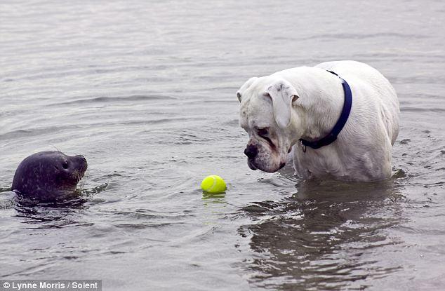 """""""Εγώ το μπαλάκι μου ήρθα να πάρω"""" - Φωτογραφία από τη Daily Mail"""