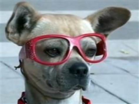 Δεν θα πιστέψετε τι μπορεί να κάνει αυτός ο σκύλος - BINTEO