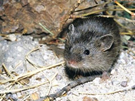 Χανιά: Πέθανε 20χρονος μετά από επαφή με ποντίκι