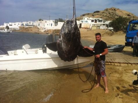 Μύκονος: Ένα ψάρι που για να μεταφερθεί χρειάστηκε γερανός - Ο ψαράς που έγινε θέμα συζήτησης στα social media (Φωτό)!