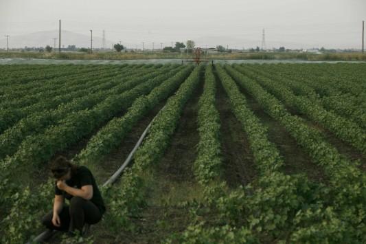 Μεγάλο σκάνδαλο με αγρότες που `άρμεγαν` τις κοινοτικές επιδοτήσεις