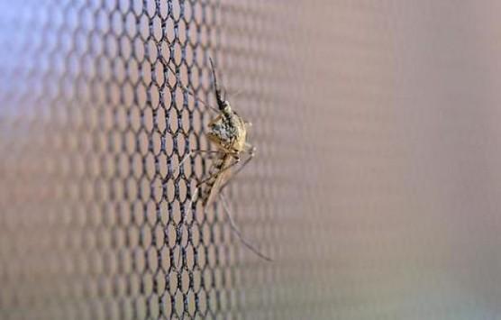 Θεσ/νίκη: Αεροψεκασμοί το Σαββατοκύριακο για τα κουνούπια - Διαβάστε τις οδηγίες