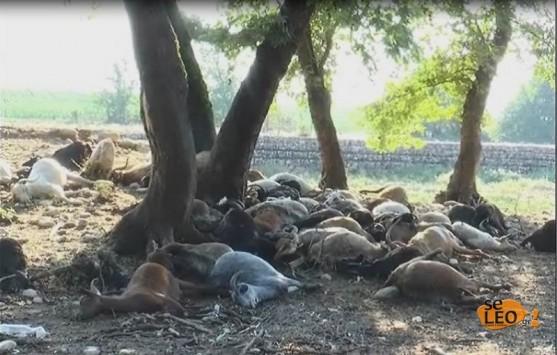 Θεσσαλονίκη: Κεραυνός σκότωσε ένα ολόκληρο κοπάδι - Φωτό και βίντεο για το γεγονός που κάνει το γύρο των social media!