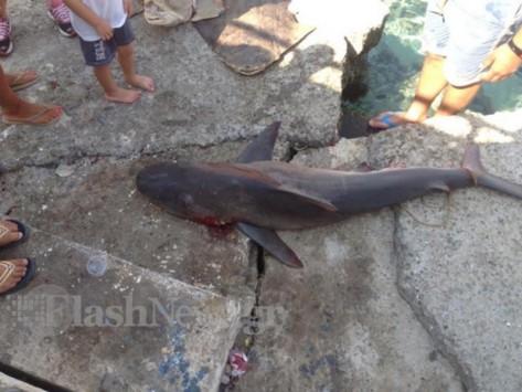 Σφακιά: Ο ψαράς έβγαλε... καρχαρία! ΦΩΤΟ