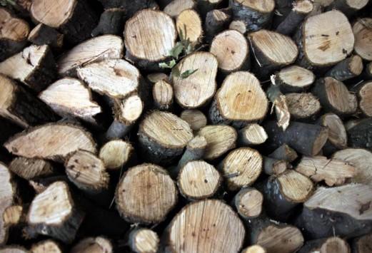 Πατέρας και γιος έδειραν τον δασοφύλακα που τους έπιασε να κόβουν ξύλα παράνομα