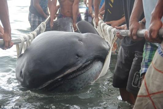 Εικόνες που κόβουν την ανάσα! Μεγαλόστομος καρχαρίας εντοπίστηκε από ψαράδες