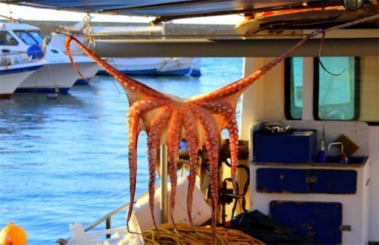 Χανιά: Δείτε την ψαριά που διεκδικεί τον τίτλο της καλύτερης φωτογραφίας του μήνα - Την τράβηξε τουρίστρια από την Αγγλία!