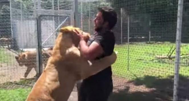 Η στιγμή που το λιοντάρι ορμάει σε αυτόν τον άνδρα και τον ρίχνει στο έδαφος - Δείτε τι έγινε (ΒΙΝΤΕΟ)