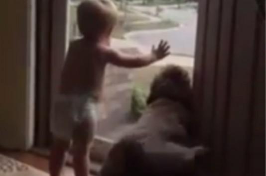 Αυτό είναι το πιο γλυκό βίντεο που γονάτισε το Facebook