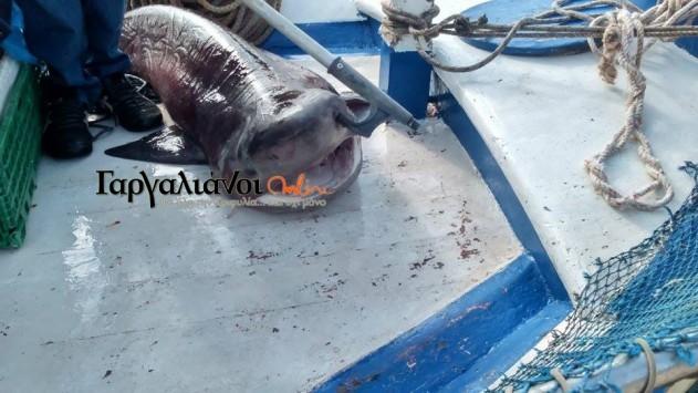 Μεσσηνία: Σήκωσε τα δίχτυα του και είδε αυτό το ψάρι - Δεν πίστευε στα μάτια του (Φωτό)!