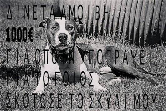 Ηλεία: Επικήρυξαν στο facebook τον δολοφόνο του σκύλου που βλέπετε (Φωτό)!