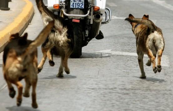 Τρίπολη: Εφιάλτης για μαθητή που περικυκλώθηκε από αγέλη σκύλων - Το χρονικό του τρόμου!