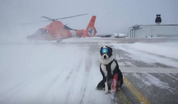 Ο πιο cool σκύλος που έχετε  δει ποτέ - Δείτε που εργάζεται και γιατί φοράει μάσκα του σκι!