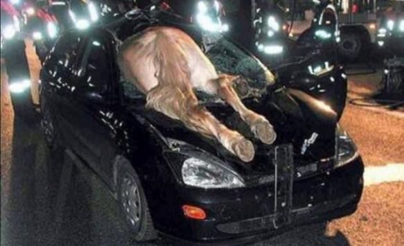 Αυτοκίνητο έπεσε πάνω σε άλογο στη Μακρακώμη!
