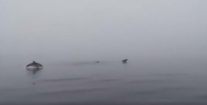 Απίθανα παιχνίδια δελφινιών στην Εύβοια (Video)