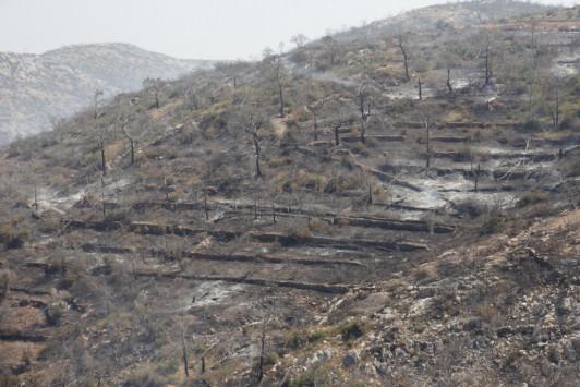 Χίος: Κυβερνητικές υποσχέσεις μετά τη μεγάλη φωτιά - Τι είπε ο Βαγγέλης Αποστόλου στους μαστιχοπαραγωγούς...