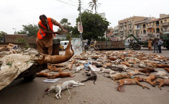 Κτηνωδία στο Πακιστάν - Δηλητηρίασαν χιλιάδες αδέσποτα σκυλιά - ΣΚΛΗΡΕΣ ΕΙΚΟΝΕΣ
