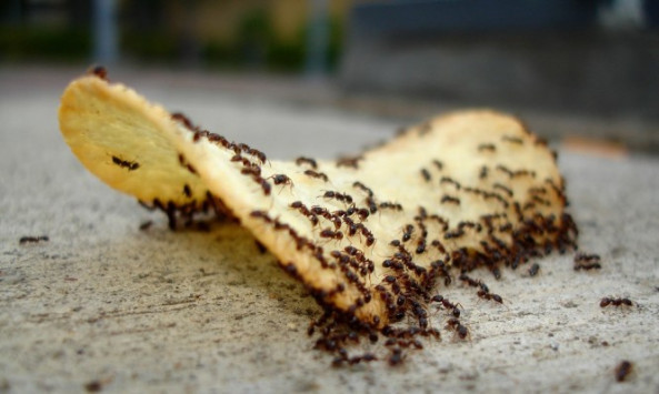 Αυτό είναι το κόλπο για να εξαφανίσετε τα μυρμήγκια από το σπίτι!
