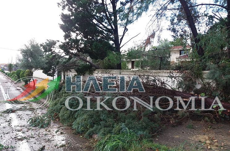 ΦΩΤΟ από iliaoikonomia.gr