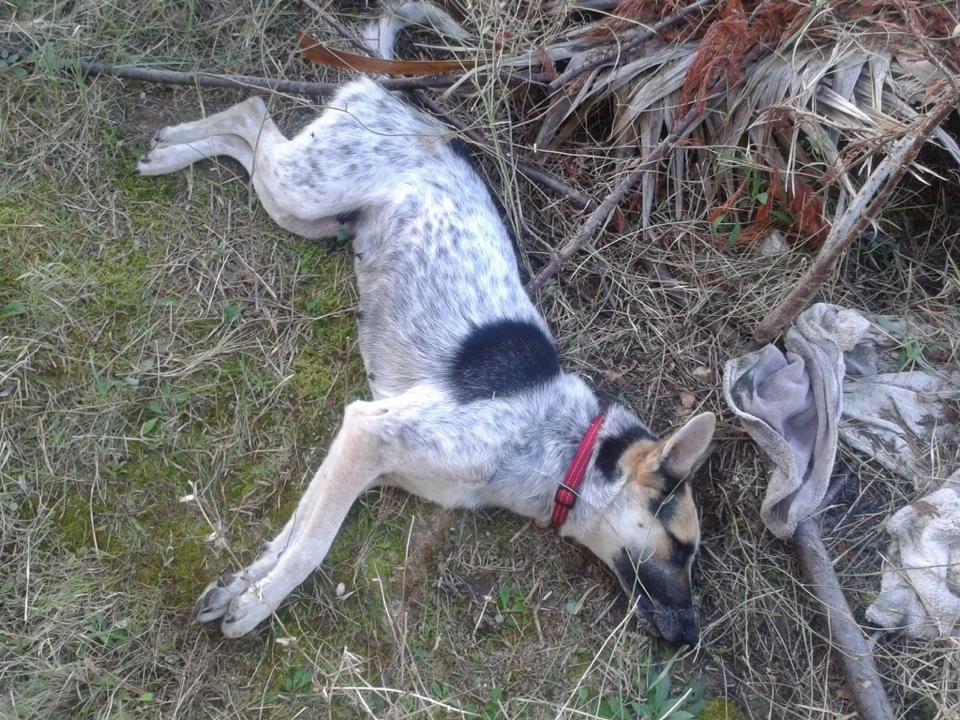 Χαλκιδική κακοποίηση σκύλων