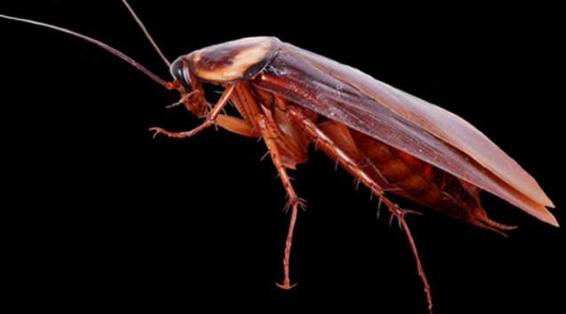 Έβγαλαν με επέμβαση ζωντανή κατσαρίδα από το κρανίο της!