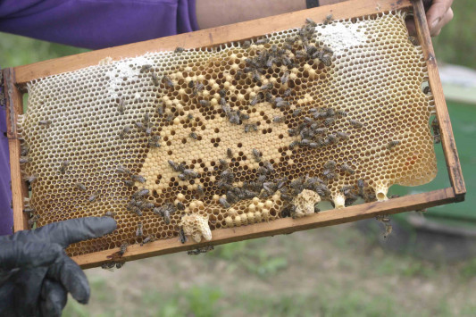 Αρκαδία: Το μέλι που ''τρελαίνει'' τη Μεγάλη Βρετανία - Σε πελάγη ευτυχίας οι ιδιοκτήτες της ελληνικής εταιρείας!