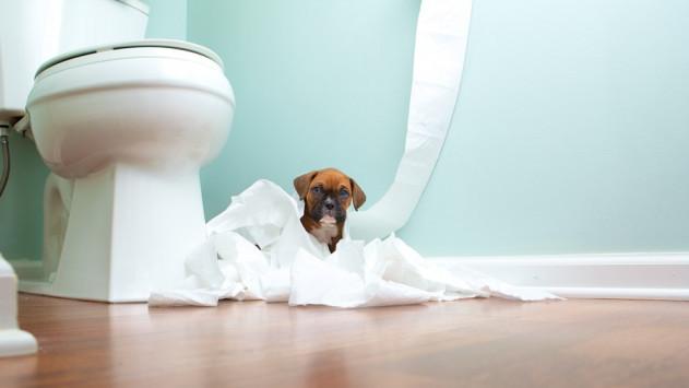 Τι σημαίνει όταν ο σκύλος σάς ακολουθεί στο μπάνιο