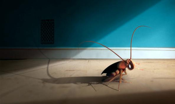 Κατσαρίδες: «Προετοιμασία» ενόψει ζέστης – Φυσική παγίδα με καφέ