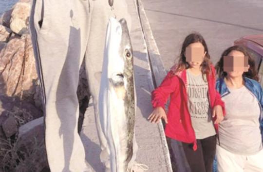 Μεσσηνία: Λαγοκέφαλος πιάστηκε με πετονιά - Αν και ερασιτέχνης δεν έπεσε στην παγίδα [pics]