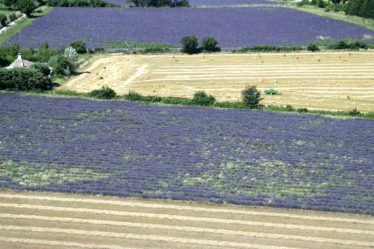 Παραχώρηση 1.000 στρεμμάτων σε 100 νέους αγρότες για την καλλιέργεια αρωματικών φυτών