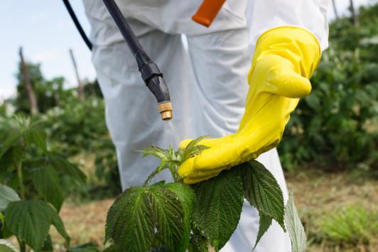 Ποια φρούτα και λαχανικά έχουν τα περισσότερα φυτοφάρμακα