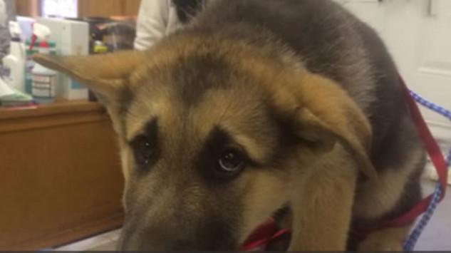 Όταν οι ιδιοκτήτες κοιμούνται, αυτό το σκυλάκι δεν παίρνει τα μάτια του από πάνω τους. Ο λόγος σπαράζει καρδιές