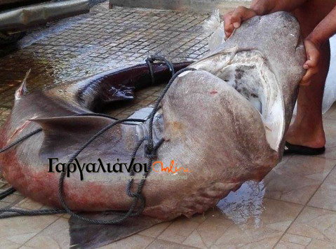 Μεσσηνία: Ασήκωτα τα δίχτυα των ψαράδων - Έπαθαν πλάκα όταν είδαν την εικόνα στην Μαραθόπολη [pics]