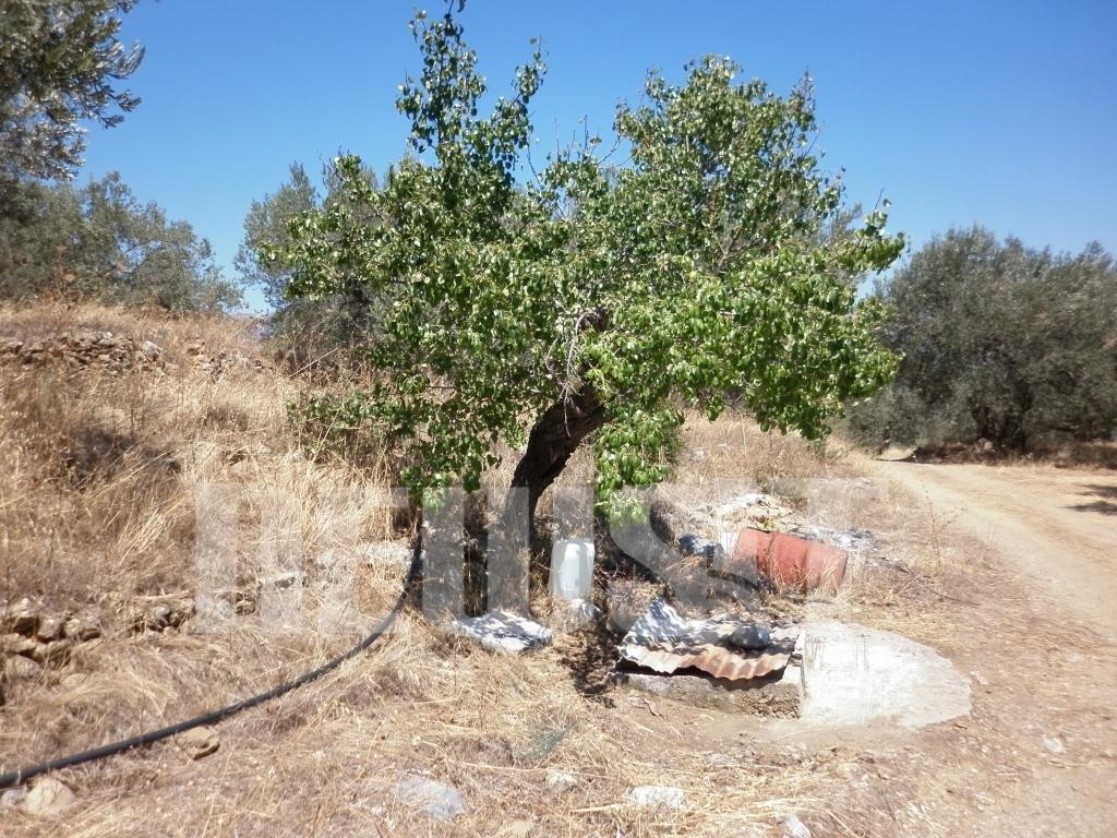 Το Newsit στο  δύσβατο σημείο όπου βρέθηκε το πτώμα της 11χρονης