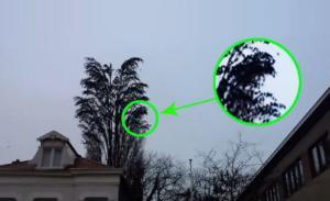 Κοιτάξτε πιο κοντά αυτό το δέντρο γιατί δεν είναι κανονικό – Στο 0:16 θα καταλάβετε το λόγο!