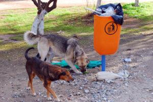 Χανιά: Άγρια επίθεση από αδέσποτα σκυλιά – Τον έριξαν και άρχισαν να τον δαγκώνουν!
