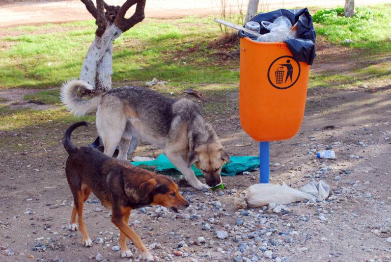Χανιά: Άγρια επίθεση από αδέσποτα σκυλιά – Τον έριξαν και άρχισαν να τον δαγκώνουν! | Newsit.gr