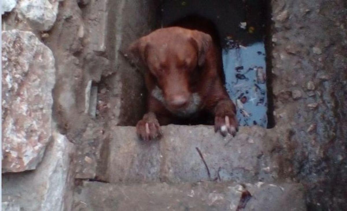 Λαμία: Έτσι έσωσαν τον αδέσποτο σκύλο που παγιδεύτηκε σε φρεάτιο [pics] | Newsit.gr