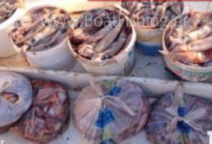 Εύβοια: Έπιασαν αυτά τα θράψαλα αλλά η χαρά τους δεν κράτησε για πολύ [pic]