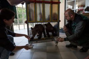 Φλώρινα: Γνωρίστε τον Μπρούνο και τη Μάσα – Τα ορφανά αρκουδάκια που ήρθαν στην Ελλάδα [pics, vid]