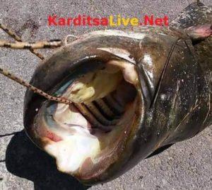 Καρδίτσα: Έπεσε με ψαροντούφεκο στη λίμνη Πλαστήρα και η συνέχεια τον έκανε διάσημο στην περιοχή [pics]