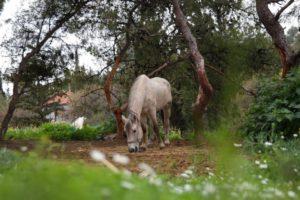 Ήπειρος: Μετέφεραν με άλογα 569 κιλά χασίς!