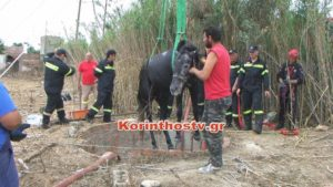 Συγκλονιστική διάσωση αλόγου που έπεσε σε πηγάδι στην Κόρινθο [vid]