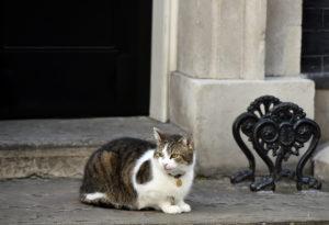 Βρετανία – Ποιες εκλογές; Ο Λάρι ο γάτος το βιολί του! [pics]