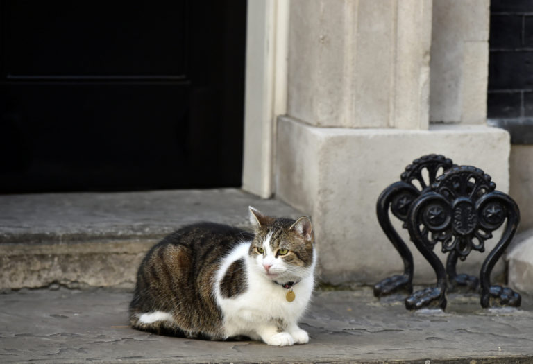 Βρετανία – Ποιες εκλογές; Ο Λάρι ο γάτος το βιολί του! [pics]   Newsit.gr