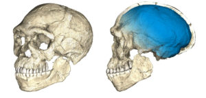 Ανακαλύφθηκε το παλαιότερο απολίθωμα του Homo sapiens